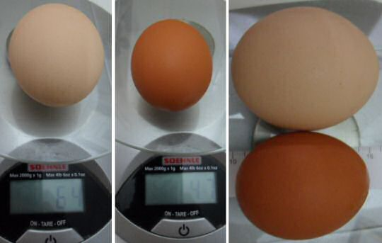 A large egg in my fridge weighs 64 grams, a small egg weighs 46 grams