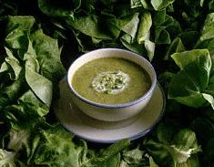 Lettuce soup recipe