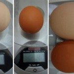 How much cholesterol in an egg?